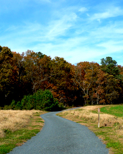 Photo of a Delaware State Park trail in the fall.